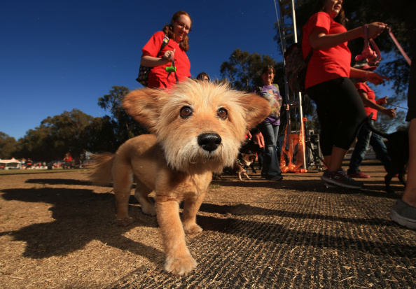 'Hector and the Search for Happiness' Participates in Best Friends Animal Society's Strut Your Mutt