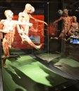 Body Worlds a Roma, Officine Farneto