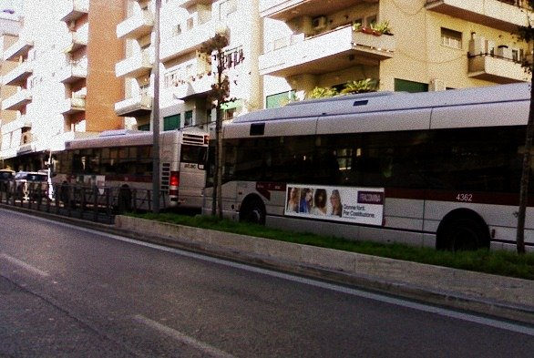 bus on the street - rome