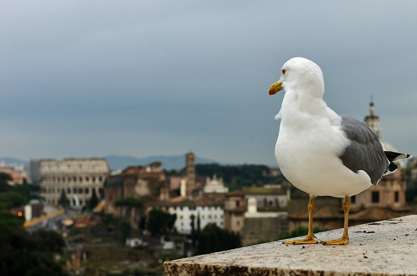 ITALY-FEATURE-ANIMAL