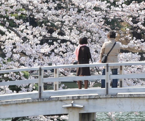 A young couple admires the cherry blosso