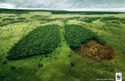 WWF_Before-it-s-too-late