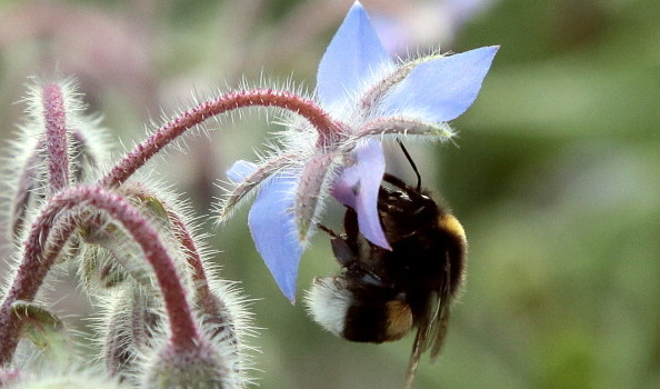 FRANCE-AGRICULTURE-ANIMALS-BEES