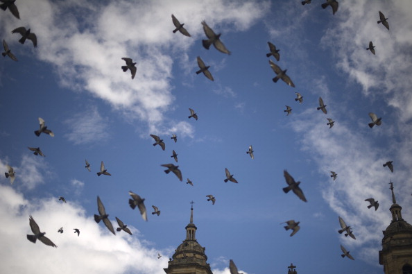 Pigeons overfly Bolivar Square during a