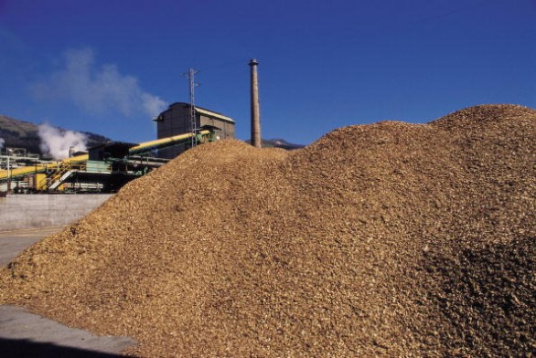 Paper factory Detail of a mountain of wooden chips in a factory of paper. Basque country