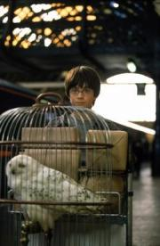 Hedwig con Harry Potter