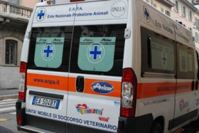 Isotta ambulanza veterinaria