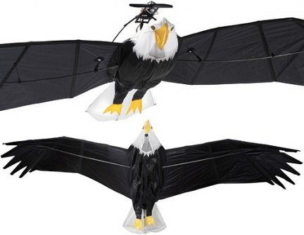 RC Bald Eagle