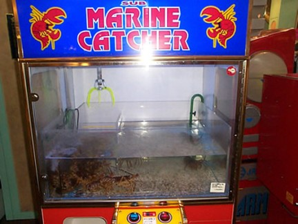 The Maine Lobster Game